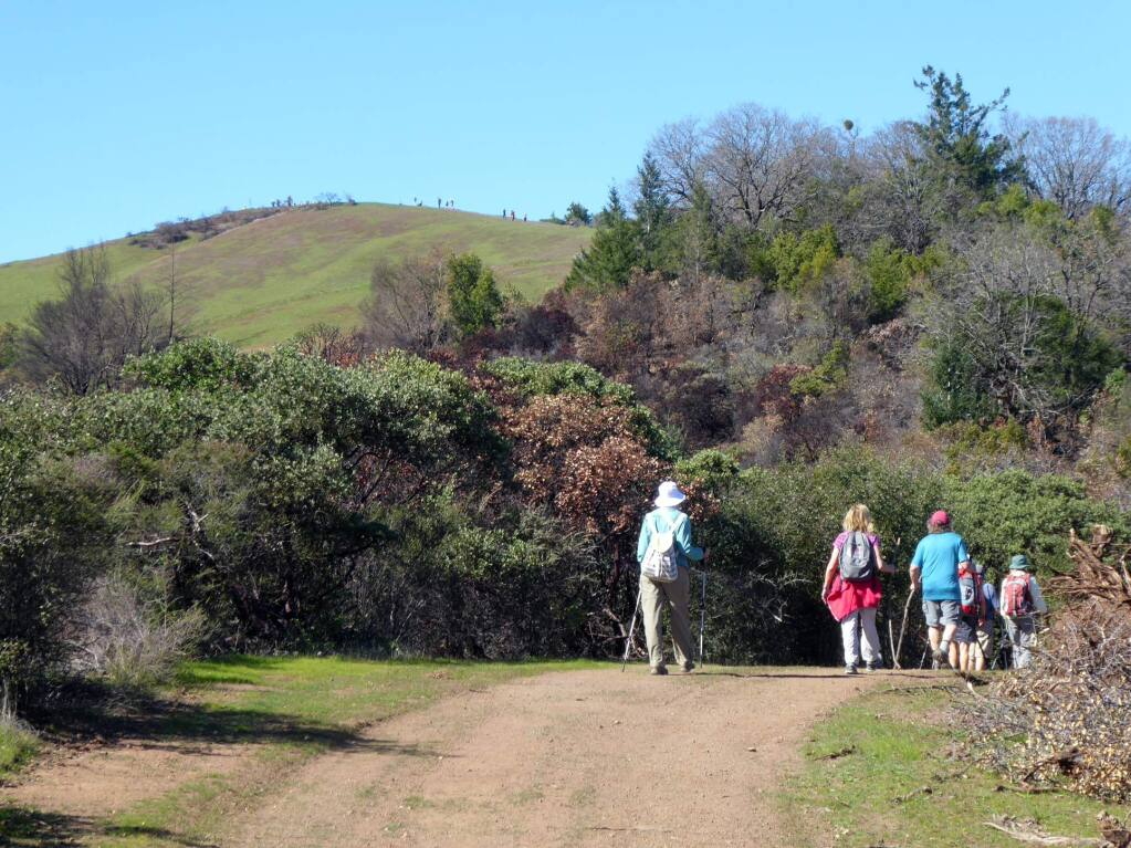 Hikers on the backroads and trails of Sugarloaf Ridge State Park in areas formerly closed by the October fires. Many trails in the park have reopened, and visitors can see the natural process of regeneration in action. (David Hough)