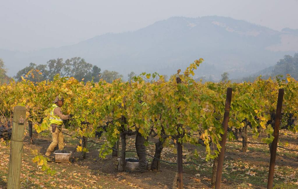 In 2018, smoke from the Camp Fire blanketed Kunde vineyards. (Photo by Robbi Pengelly/Index-Tribune)