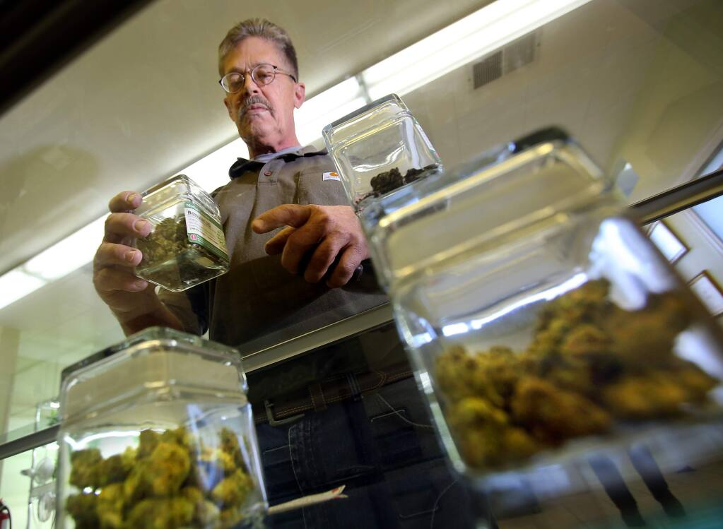 A cannabis shopper compares strains at the former Peace in Medicine dispensary in Santa Rosa, now one of two dispensaries run by Sparc in Sonoma County. (photo by John Burgess/The Press Democrat)
