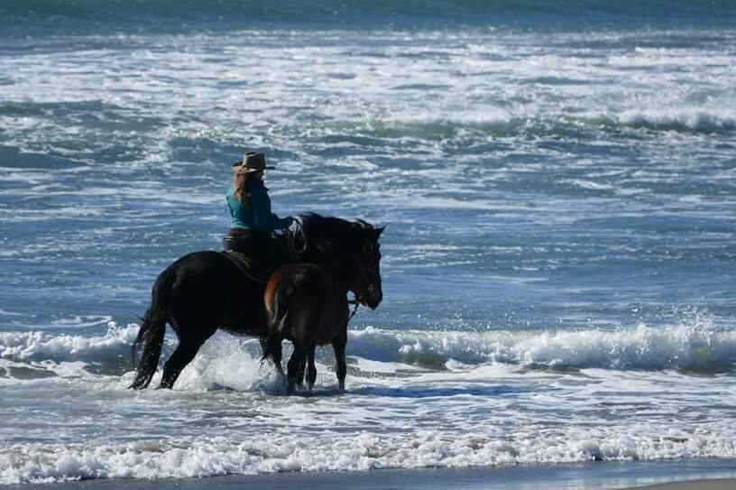 Leslie Webb on her horse, Cowboy, accompanied by her filly, Lucia, on a ride along the Sonoma Coast. A week later, Cowboy died after eating homemade cookies laced with oleander. (COURTESY PHOTO)