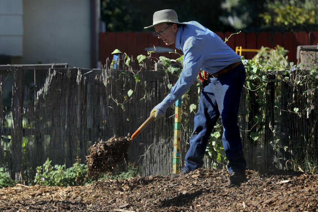 Arborist Curtis Short spreads mulch around the base of a pineapple guava tree after planting it in a neighbor's yard in Santa Rosa in October 2020. Mulching has many benefits, from retaining soil moisture to making gardening easier. (BETH SCHLANKER/ The Press Democrat)