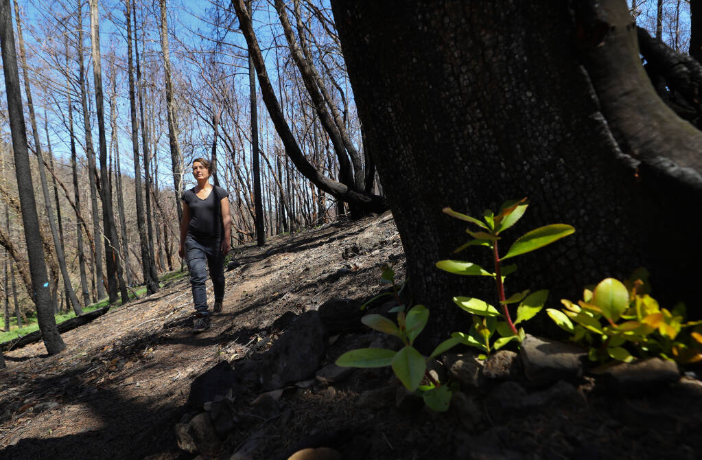 Monan's Rill Community resident Thea Carlson walks along a trail, where new madrone chutes grow from a burned madrone tree, near Santa Rosa on Thursday, April 29, 2021.  Carlson will be among community members leading hikes during the Bio Blitz event, where volunteers will be identifying wildlife, flowers, insects, and amphibians on the property.  (Christopher Chung/ The Press Democrat)