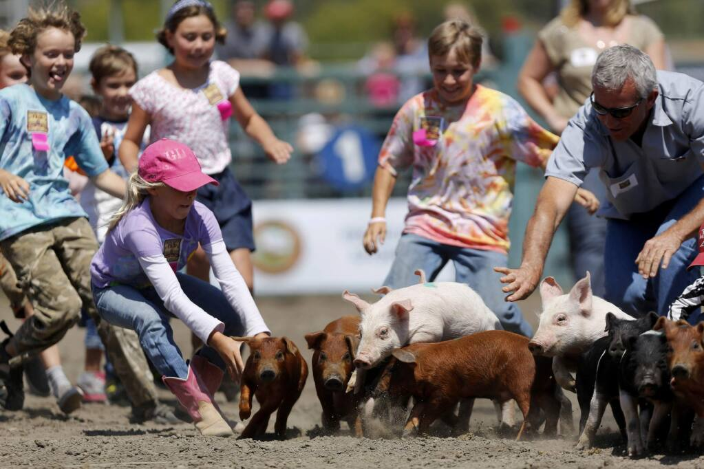 Children try to get their hands on a piglet during the Pig Scramble as part of Farmer's Day at the Sonoma County Fair on Sunday, July 28, 2013 in Santa Rosa, California. (BETH SCHLANKER/ The Press Democrat)
