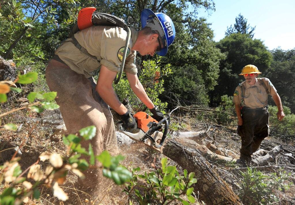 California Conservation Corp. sawyer Christian Echevarria, left, clears away oak trees killed by Sudden Oak Death (SOD) at Jack London State Park in Glen Ellen. At right is his supervisor Daniel White. (Kent Porter / Press Democrat, file)