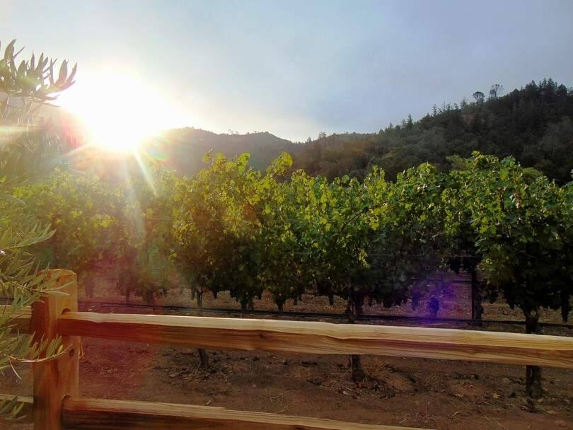 August morning over at the vineyard. Photo by Mike L.