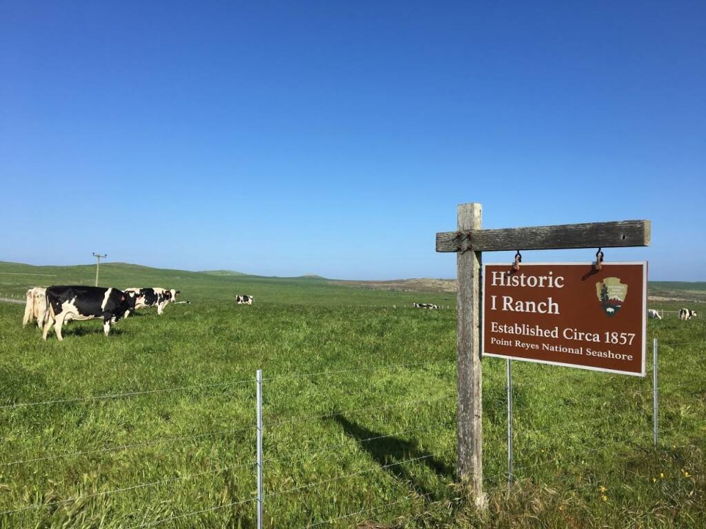 Bob McClure's family has ranched at Point Reyes National Seashore in Marin County for four generations. (Alyssa McClure photo)