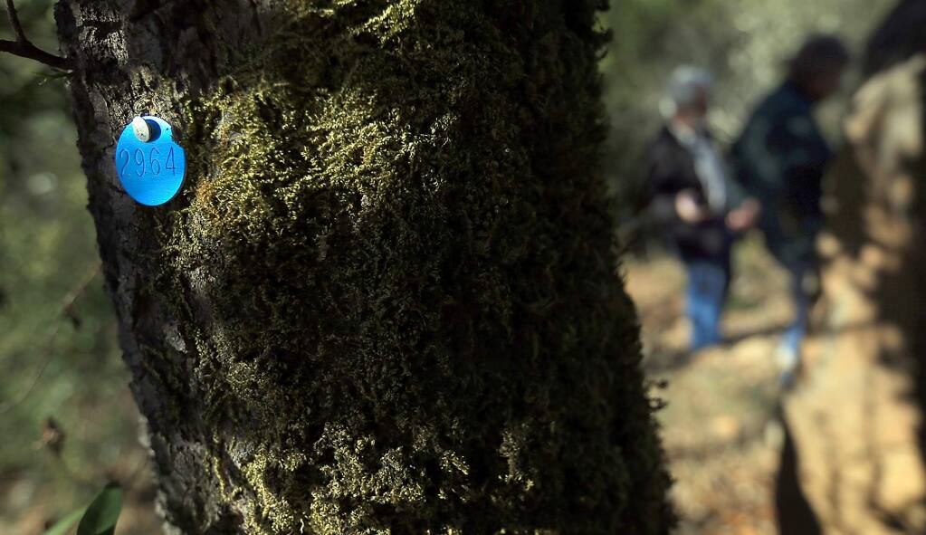 A bay laurel tree is tagged for being infected with Sudden Oak Death in Fountaingrove. (Kent Porter / PD FILE 2013)