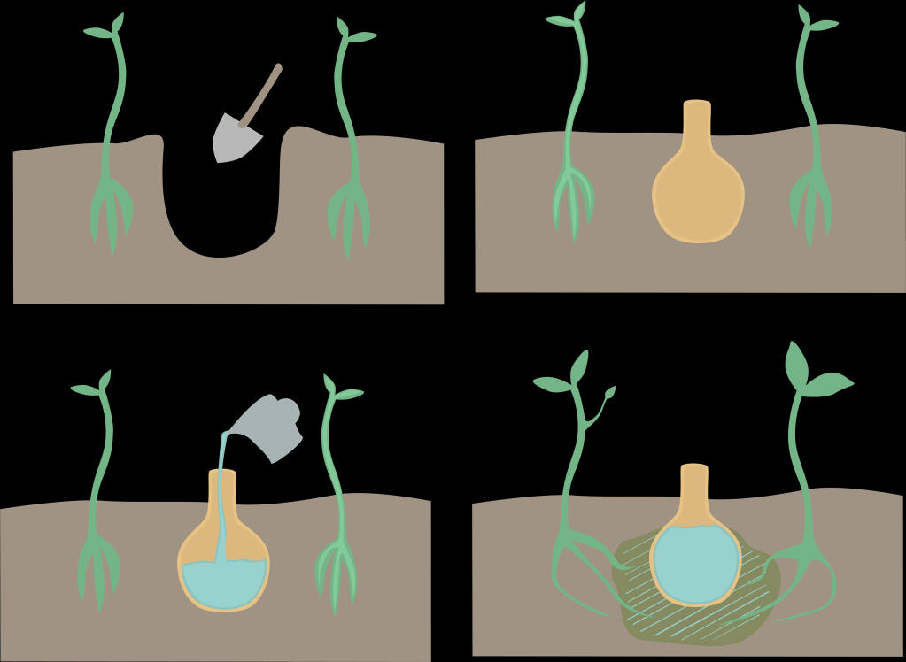Shutterstock graphic showing how use of olla pots in garden to conserve water. Ollas are porous clay pots you bury in the ground among groups of woody plants, then fill with water. The water slowly seeps through the clay, where plant roots will find it and curl around the pot to keep in touch with the moisture. Ollas really cut down on water use.