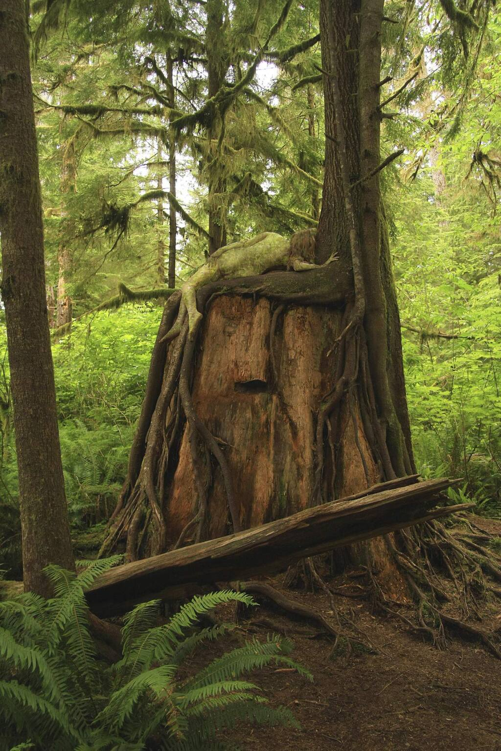 "Julianne Skai Arbor""Hemlock Green Woman"" features Julianne Skai Arbor on a nurse log of a western hemlock (Tsuga heterophylla) in Olympic National Park, Washington."