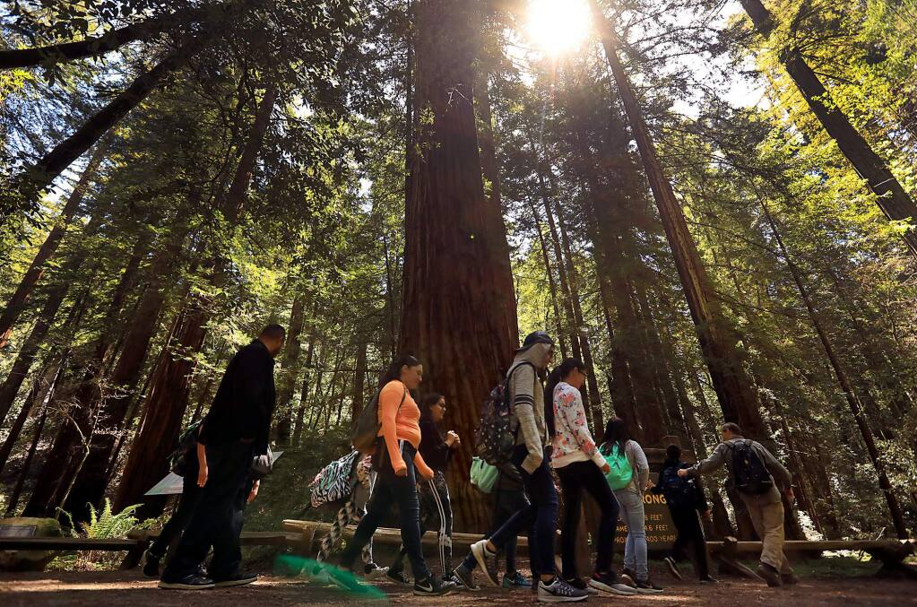 A docent led tour group passes by the Armstrong Tree, an old growth redwood in the Armstrong Redwoods State Natural Reserve in Guerneville, Tuesday May 1, 2018. (Kent Porter / The Press Democrat) 2018