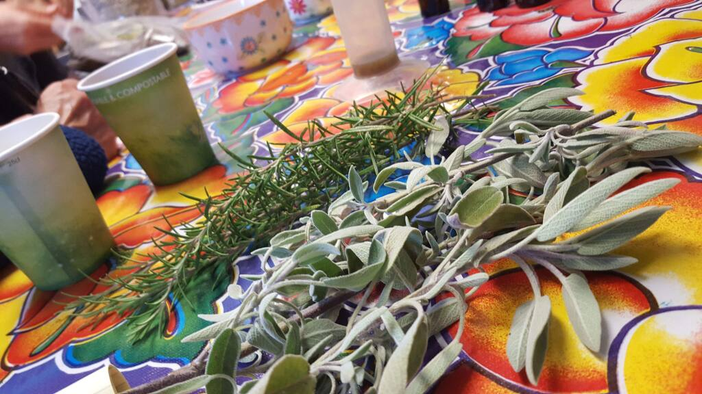 Rosemary and sage are common herbs that can be used in herbal medicine and grown easily at home.