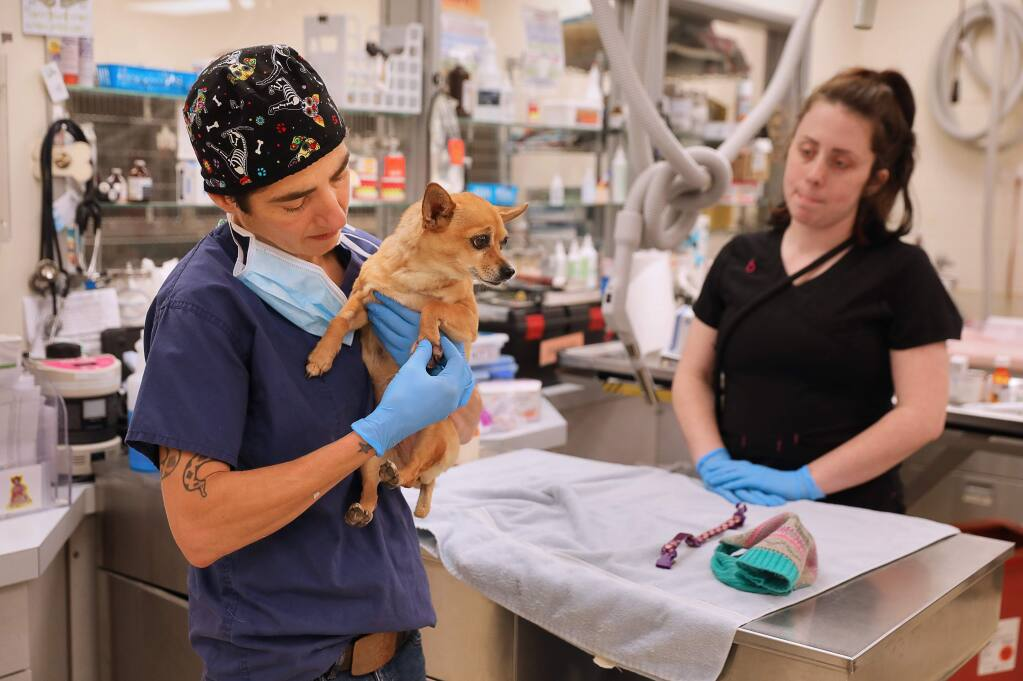 Dr. Ada Norris, left, examines a dog's infected paw at the Humane Society of Sonoma County, in Santa Rosa on Friday, February 1, 2019. The Humane Society is launching a Community Veterinary Clinic to help low income pet owners receive veterinary services at an affordable price. (Christopher Chung/ The Press Democrat)