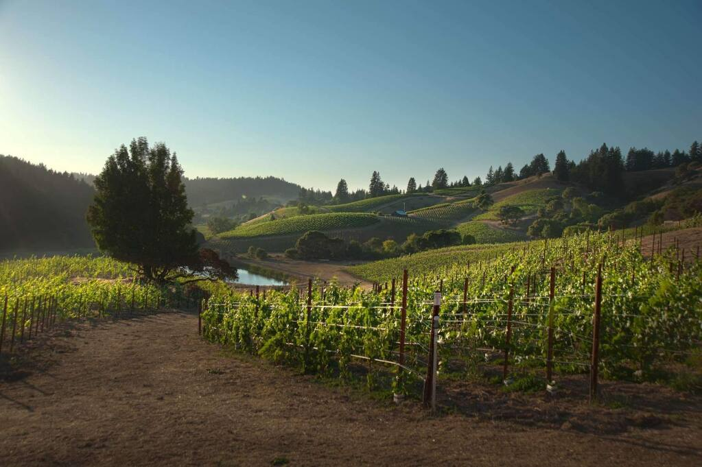 Rhys Vineyards purchased this property in Mendocino County's prime pinot noir region of Anderson Valley in 2008. In 2015, Rhys bought the 4,500-acre Clarke Ranch property at the north end of the county and planned to plant a small vineyard. (RhysVineyards.com)