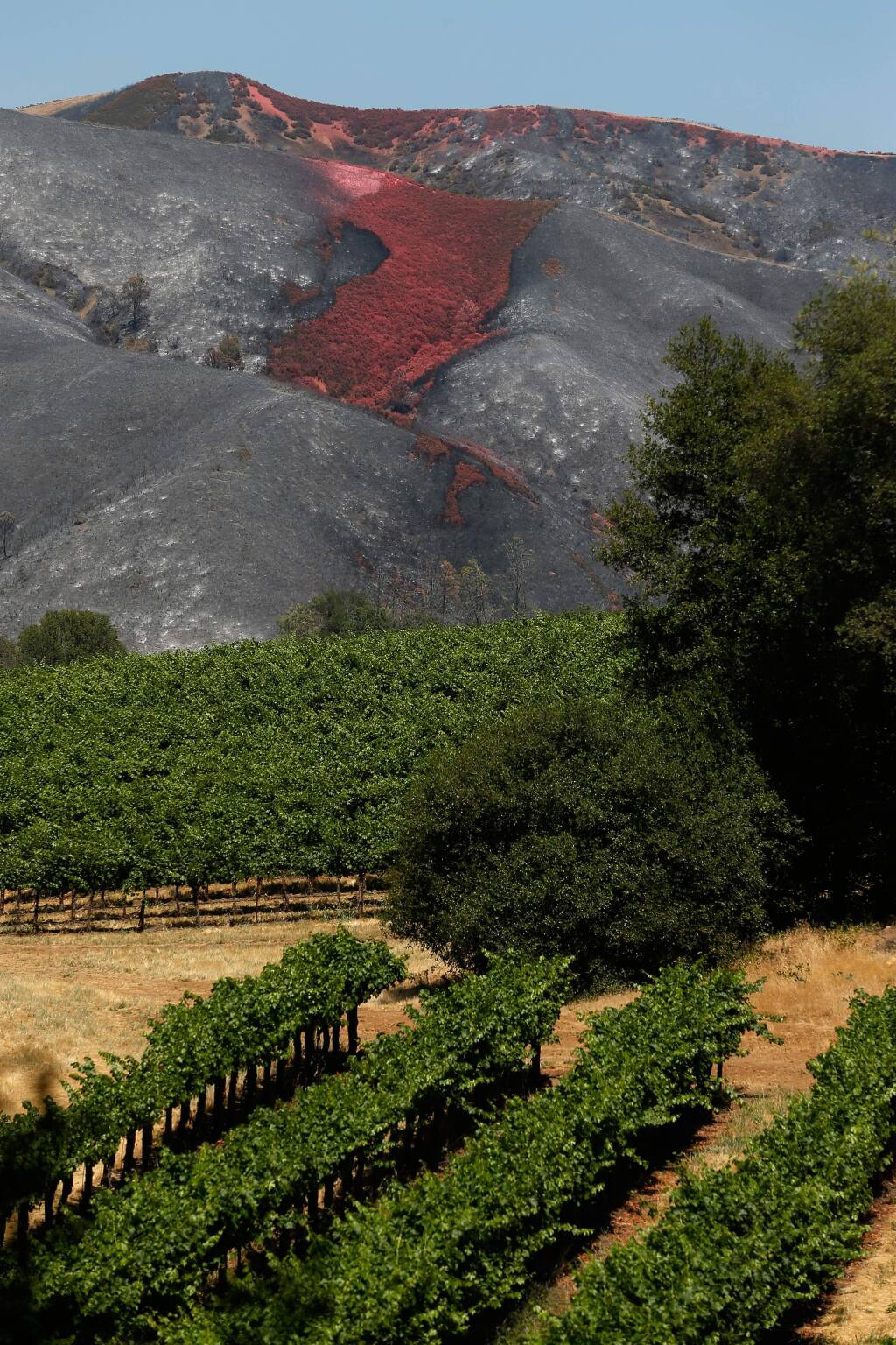 A red layer of Phos-Chek fire retardant is seen covering part of a burned hillside near Clearlake Oaks, California, on Wednesday, June 27, 2018. (Alvin Jornada / The Press Democrat)