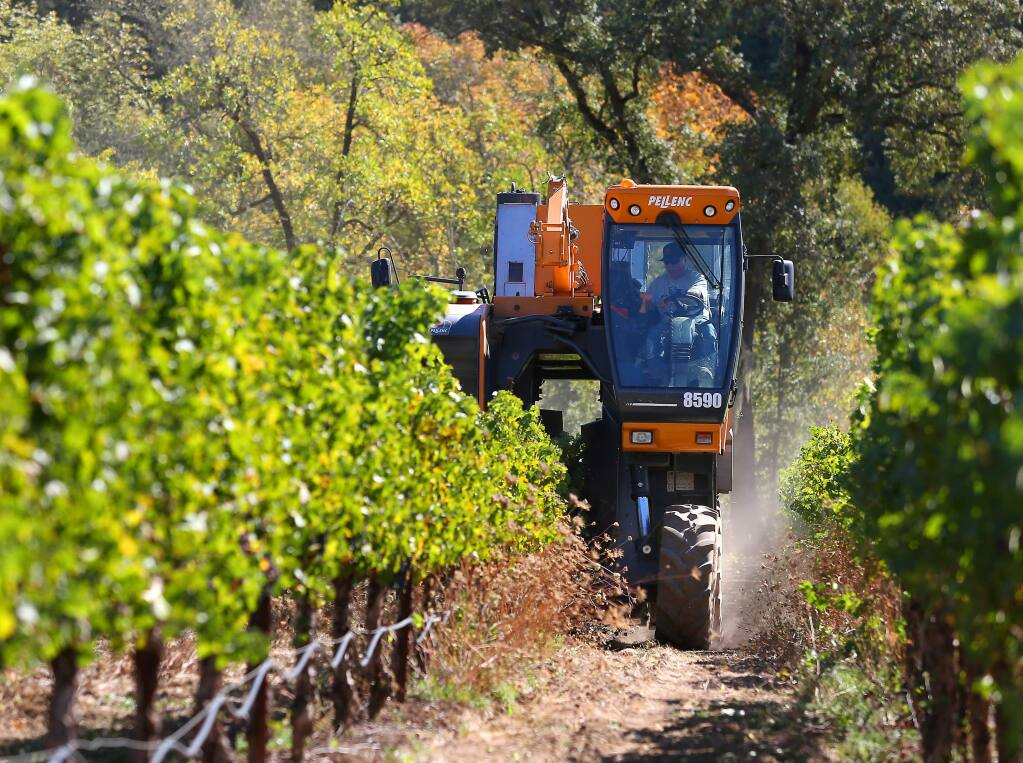 Juan Mesa drives a grape harvester along rows of cabernet sauvignon vines for Constellation Brands, in a vineyard along Chalk Hill Road, east of Healdsburg, in 2014. (CHRISTOPHER CHUNG/ PD FILE)
