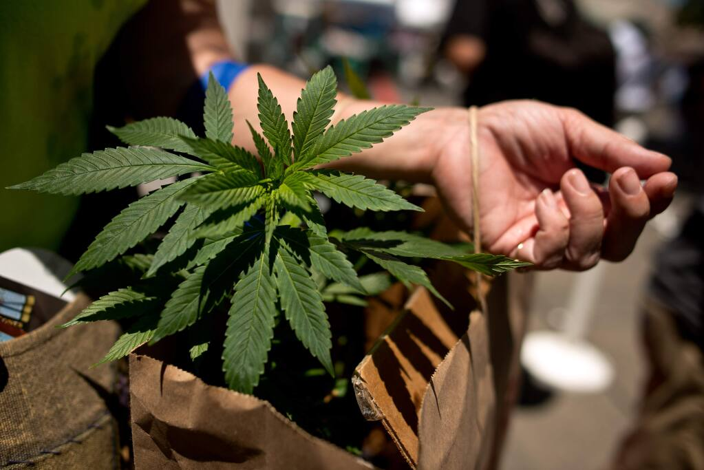 Sharon Bower of Sacramento carries a pair of marijuana plants she bought during the High Times Cannabis Cup at the Sonoma County Fairgrounds in Santa Rosa, California, USA on June 29, 2014. (Alvin Jornada / For The Press Democrat)