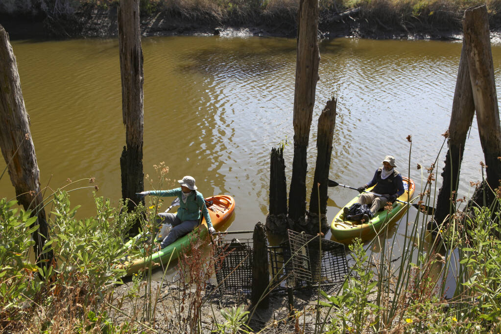 Petaluma, CA, USA, Saturday, July 25, 2020._Kati Jackson and Chris Crow kayaked along the Petaluma River on Saturday to help pick up trash during the spring cleanup held by The Friends of the Petaluma River. Washed up shopping carts sit in the mud at the edge of the river near Water Street.(CRISSY PASCUAL/ARGUS-COURIER STAFF)