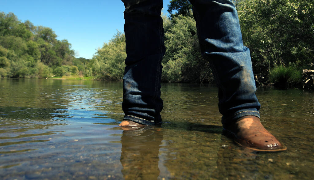 During this time in 2020, a dry year on the Russian River, the water was past the knees of Isual Macias of Hoot Owl Vineyards in the Alexander Valley. On Thursday afternoon, May 27, 2021 the water is even lower.  (Kent Porter / The Press Democrat) 2021