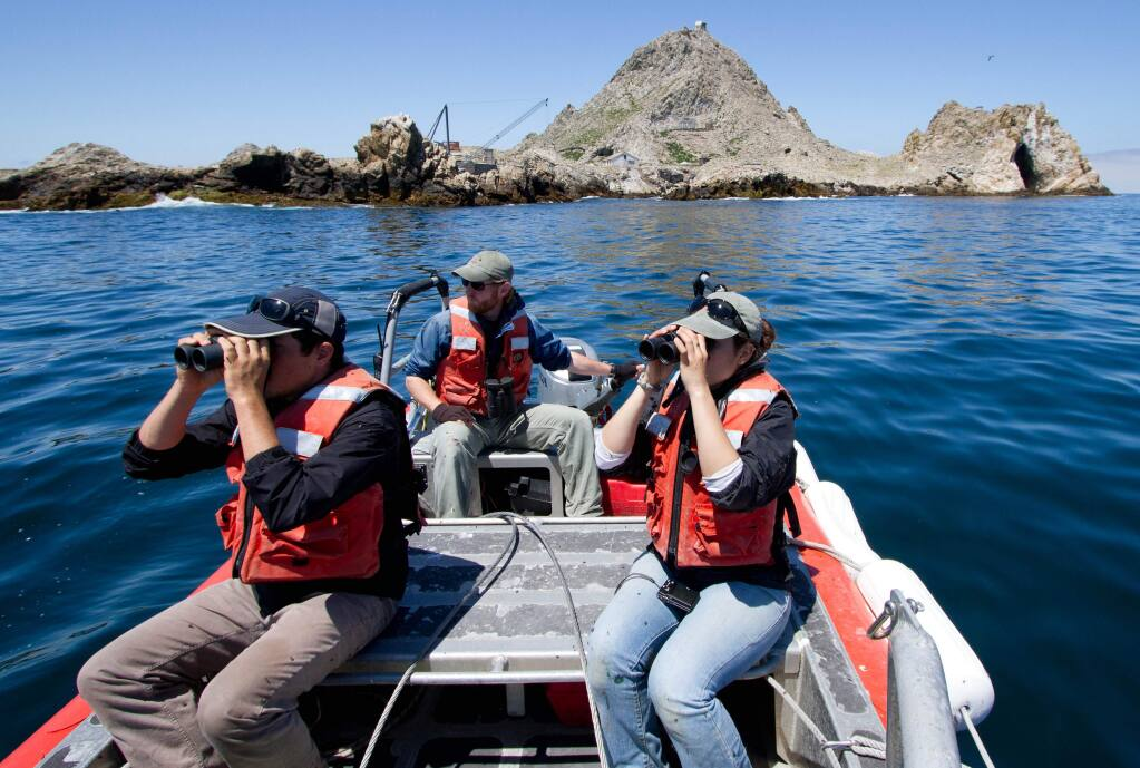 Researchers from Point Blue Conservation Science search the waters off the Farallon Islands. (Annie Schmidt)