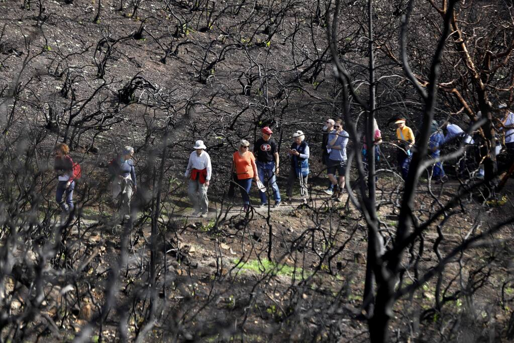During a fire recovery hike, participants walk through a burned chaparral area at Sugarloaf Ridge State Park on Sunday, Feb. 4, 2018 in Kenwood, California. (Beth Schlanker / The Press Democrat)