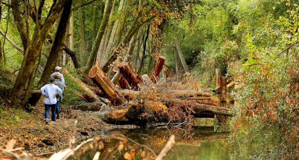 Redwood timber lashed together, is used to create fish habitat in Dry Creek, Wednesday Sept. 25, 2014 as part of the Sonoma County Water Agency's restoration of six miles of habitat on the river near Healdsburg. (Kent Porter / Press Democrat) 2014