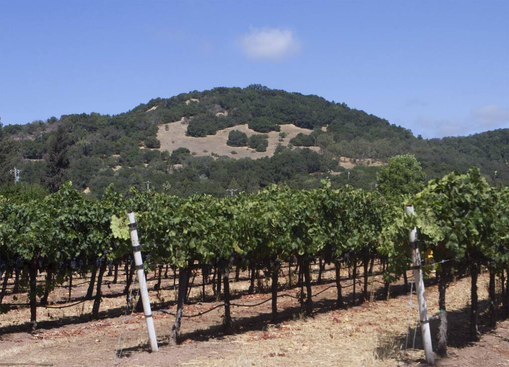 A view of Schocken Hill from Sebastiani winery's Cherry Block vineyard on Lovall Valley Road in Sonoma. (Robbi Pengelly / Index-Tribune)