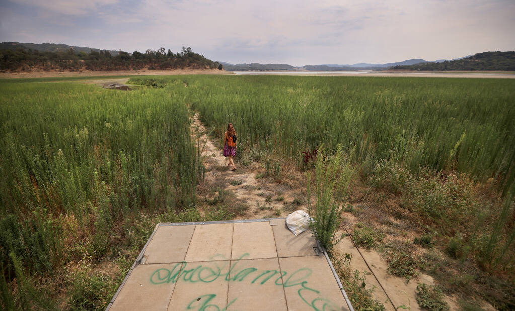Coral Mills of Kelseyville takes a midafternoon hike through the drought jungle of horseweed, some of it nearly 8 feet tall, as Lake Mendocino recedes at a record pace, Monday, July 26, 2021 east of Ukiah. (Kent Porter / The Press Democrat)