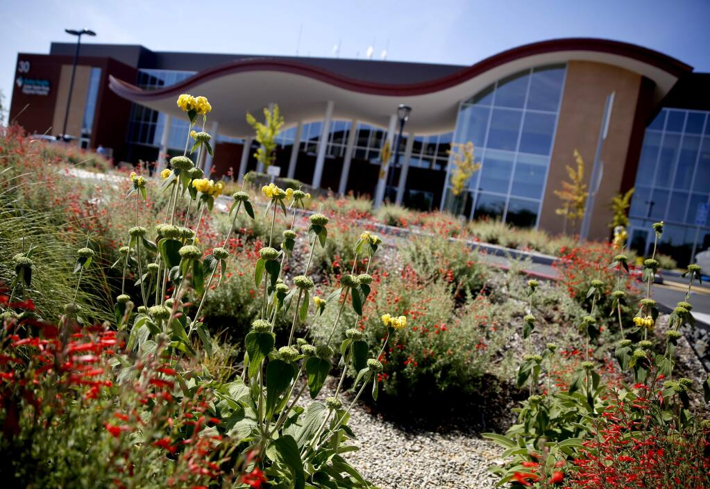 Drought resistant plants, bioswales built to channel runoff, and a highly efficient irrigation system are part of the recently installed landscaping at Sutter Santa Rosa Regional Hospital in in Santa Rosa, on Wednesday, June 3, 2015. (BETH SCHLANKER/ The Press Democrat)