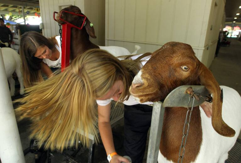 PD Editorial The soul of the Sonoma County Fair  The Press Democrat