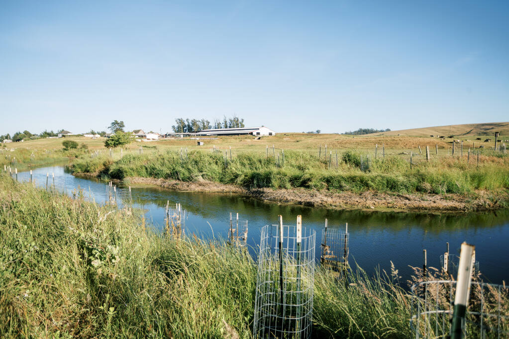 The Ocean Breeze Dairy in Valley Ford is undergoing a restoration project on Ebabias Creek. Jessica Rowland Photography
