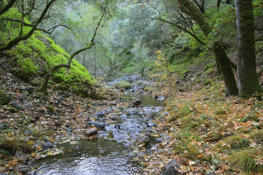 The Sonoma Land Trust has acquired 40 acres of undeveloped land at the western edge of Hood Mountain to be donated to the county parks system. (Scott Hess Photography)