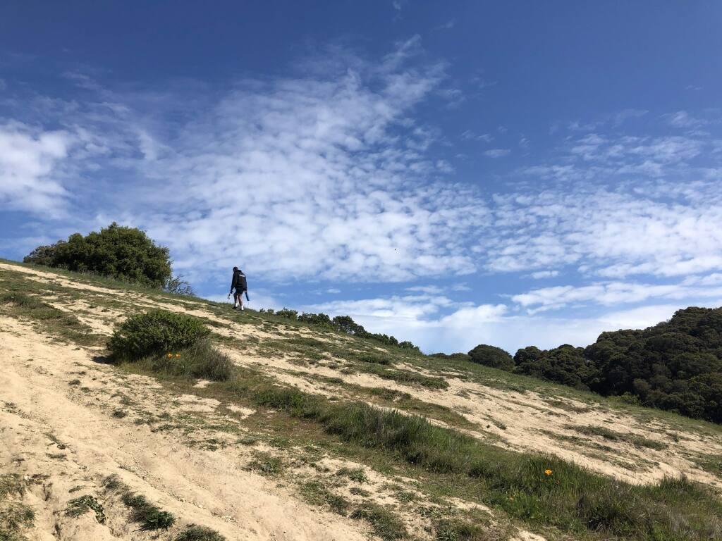 A lone hiker ascends a hill at Petaluma's Helen Putnam Regional Park. (PHOTOS BY DAVID TEMPLETON)