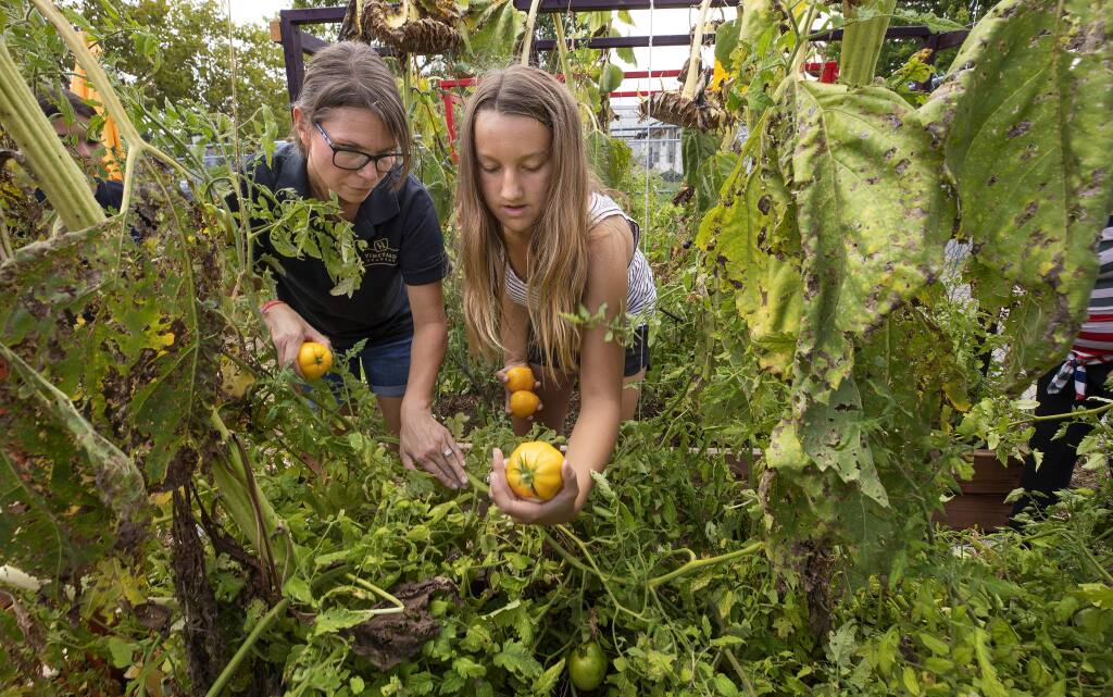 Windsor Middle School culinary program teacher Amie Lands shows Gracie Shaw, 12, how to tell if a tomato is ripe in the garden that supplies produce for use in the kitchen.(photo by John Burgess/The Press Democrat)