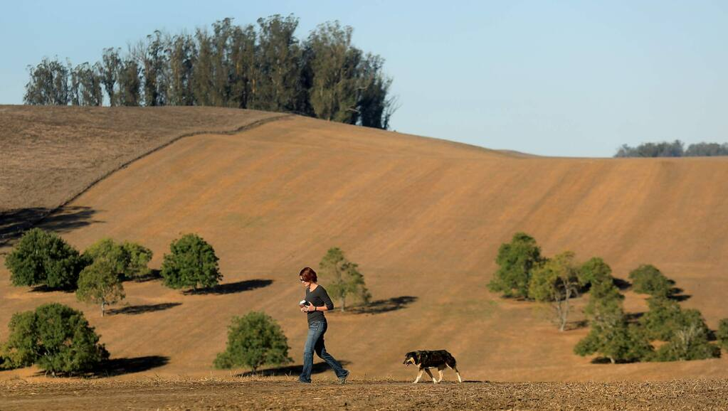 Jana McClelland and dog Missy tour the 300 acre Hansen Ranch Friday Oct. 6, 2017. The county recently paid $1.88 million to preserve the land which is farmed by the McClelland's Dairy ranch. (Kent Porter / The Press Democrat)