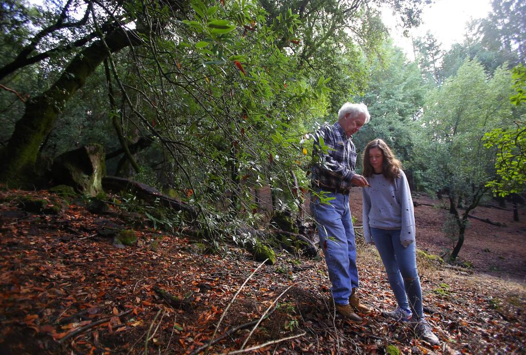 Bruce McConnell, a boardmember on the Fountaingrove II Open Space Maintenance Association, shows a California Bay Laurel leaf that is possibly carrying the sudden oak death disease pathogen to his 12-year-old granddaughter, Caitlyn Oliver, in an open space area near Crown Hill Drive, in Santa Rosa, on Monday, October 17, 2016. (Christopher Chung/ The Press Democrat)