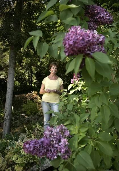 Growing lilacs in Sonoma County takes special care. Flora Fields has mastered it in her Santa Rosa garden. (John Burgess/The Press Democrat)