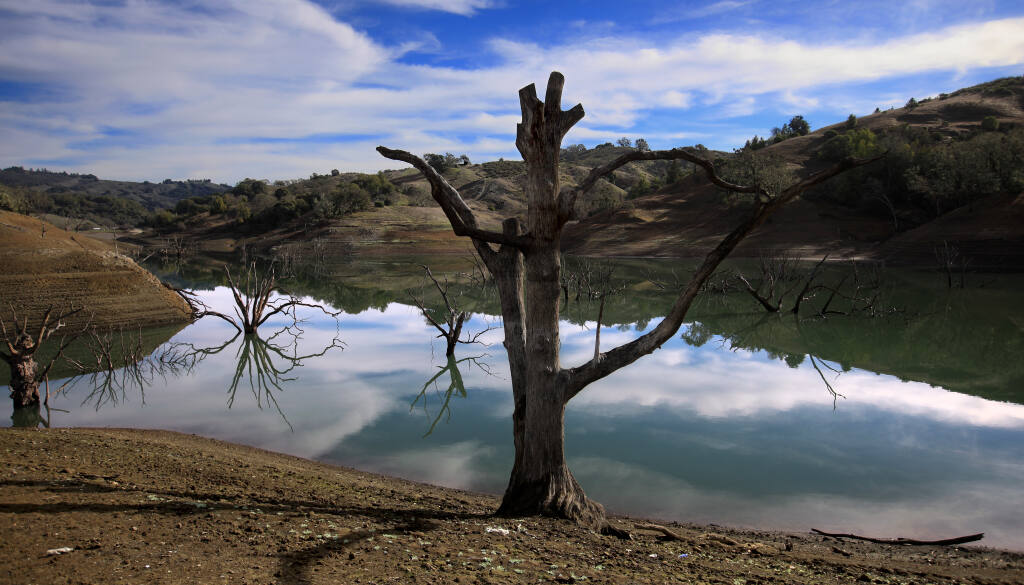 Yorty Creek on the east side of Lake Sonoma is difficult to navigate as water levels continue to drop, Friday, Jan. 15, 2021.  During an average year, the trees would be completely submerged. (Kent Porter / The Press Democrat) 2021