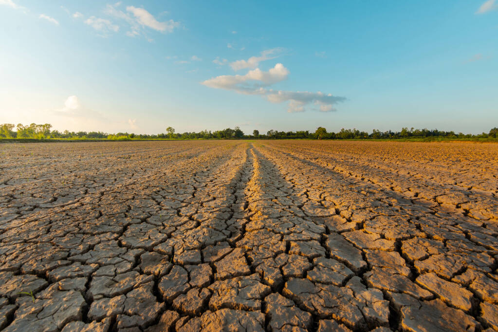 Drought parched farmland (stock photo)