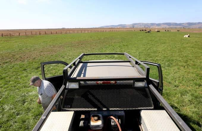 The surrounding vegetation is brown, while the Mulas pastures are green, irrigated by recycled water, Monday Sept. 8, 2014. (KENT PORTER/ PD FILE)