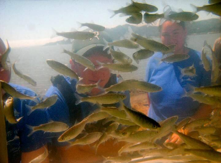 Schoolchildren watch soon-to-be-released fish in an aquarium during one of Tiburon Salmon Institute's 2010 Kiss 'n' Release days. (Tiburon Salmon Institute)