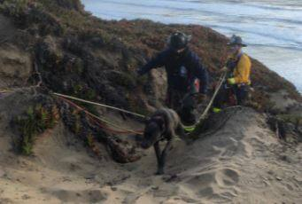 Firefighters rescued a puppy from a cliff at San Francisco's Fort Funston, Friday, March 5, 2021. (San Francisco Fire Department / Twitter)