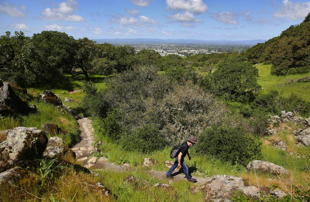 Christian Mordh hikes in Taylor Mountain Regional Park and Open Space Preserve, in Santa Rosa, on Thursday, April 20, 2017. (Christopher Chung/ The Press Democrat)