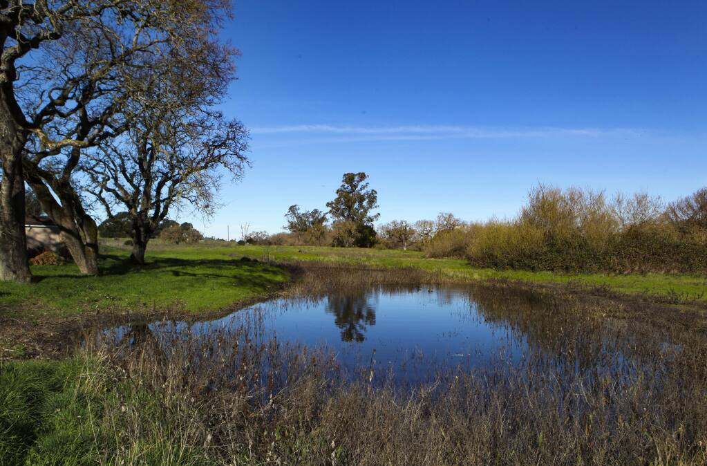 Opponents of Sid Common, a proposed housing development off Payran, want to preserve the wetlands, the oak trees and open space. (CRISSY PASCUAL/ARGUS-COURIER STAFF)