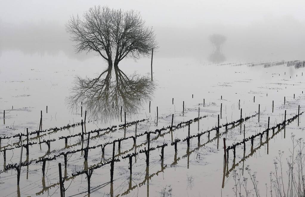 FILE - In this Jan. 9, 2017, file photo, vineyards remain flooded in the Russian River Valley in Forestville, Calif. More than 40 percent of California has emerged from a punishing drought that covered the whole state a year ago, federal drought-watchers said Thursday, Jan. 12, a stunning transformation caused by an unrelenting series of storms in the North that filled lakes, overflowed rivers and buried mountains in snow. (AP Photo/Eric Risberg, File)