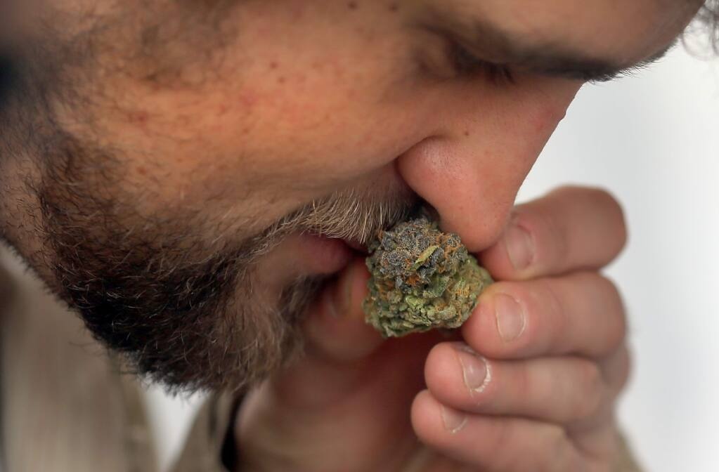 Ross of Humboldt County smells a bud of marijuana in the medical marijuana area during the Emerald Cup at the Sonoma County Fairgrounds in Santa Rosa, Sunday Dec. 14, 2014. (Kent Porter / Press Democrat)