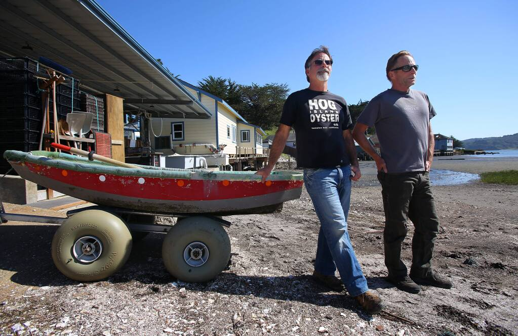 Hog Island Oyster Company partners Terry Sawyer, left, and John Finger at their Tomales Bay facility, in Marshall on Monday, April 7, 2014. (Christopher Chung/ The Press Democrat)