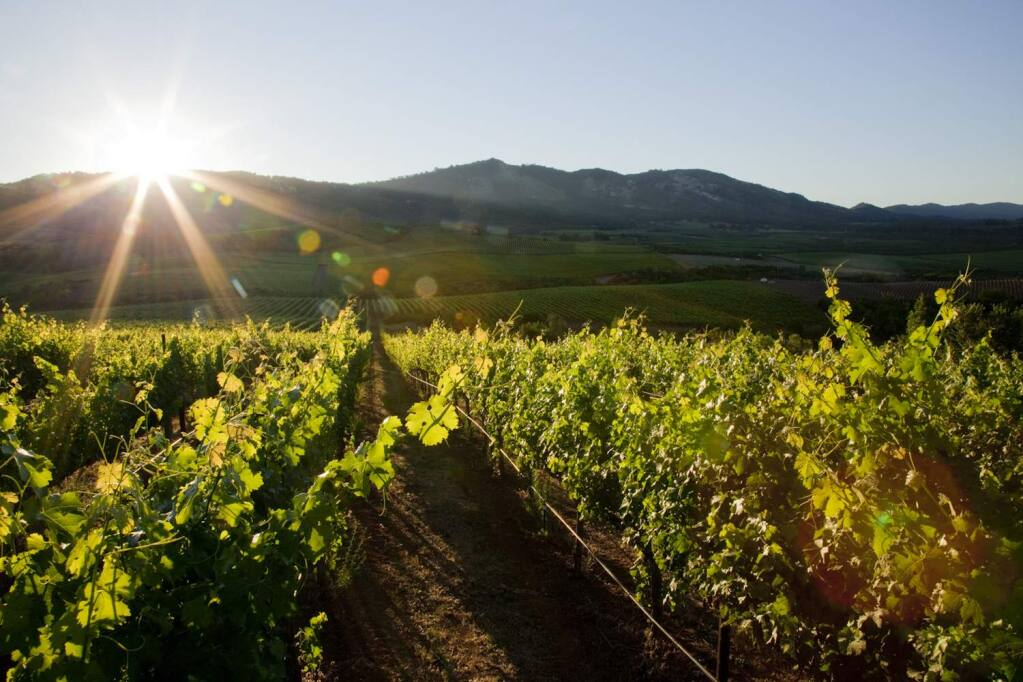 E&J Gallo in early 2017 buys Stagecoach Vineyard, which has 600 acres of grapes in Napa County's Atlas Peak appellation. (M.J. WICKHAM, 2007)