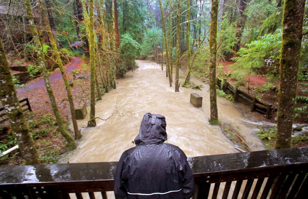 Larry Birch, operations manager of Alliance Redwoods near Camp Meeker, watches Dutch Bill Creek rage after days of rain, Monday, Dec. 21, 2015. (Kent Porter / Press Democrat)