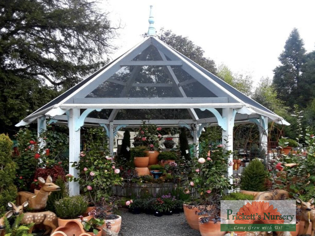 Prickett's Nursery  with  2 unique locations carries  annual & perennial color, shrubs & trees, beautiful roses, graceful grasses, succulents, organic vegetable starts, fruit trees, houseplants, pottery & statuary, garden decor and more.