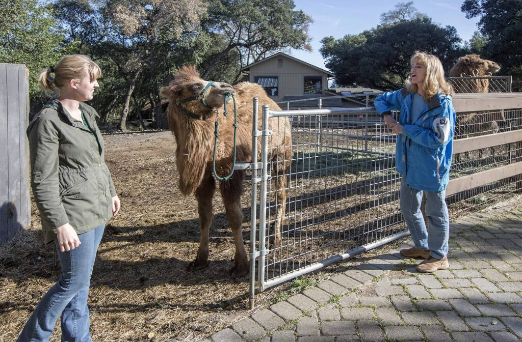 Freddy, the newest addition to the Lyon Ranch therapy menagerie, makes his wishes for walk known to Lynette Lyon (left) and Robin Lyon. (Photo by Robbi Pengelly/Index-Tribune)